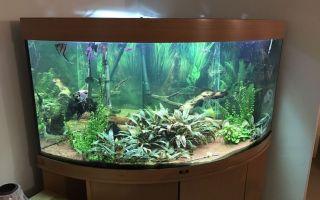 Преимущество аквариумов